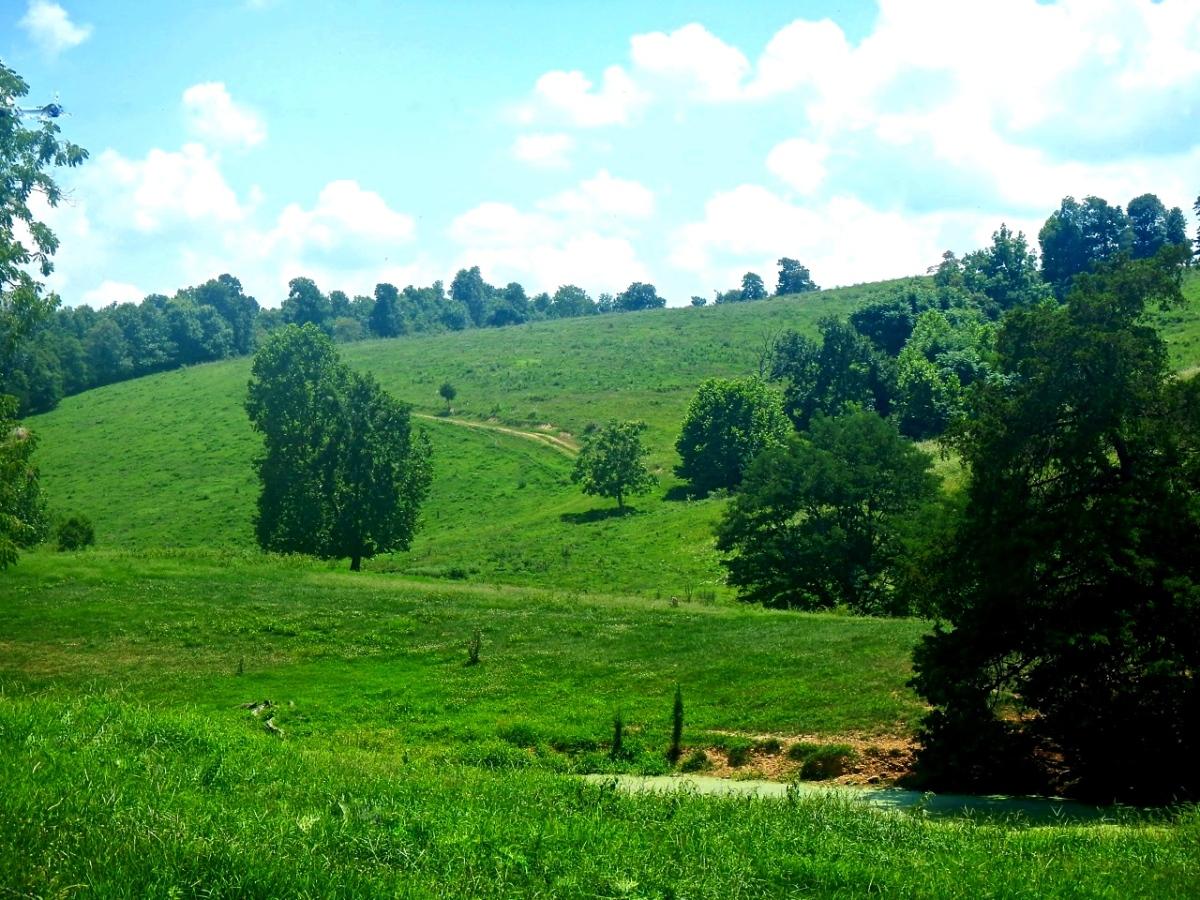 Hillside pasture at Rudd, Arkansas.