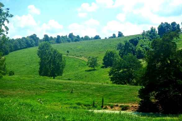 Hillside pasture at Rudd, Arkansas.